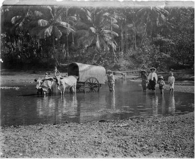Bullock cart and people paddling in river