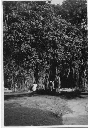 Child swinging from a tree