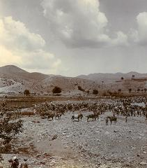 2nd Battalion Derbyshire Regiment during Tirah campaign of 1897