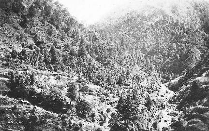 Road to Dunga Gali North West Frontier August 1924