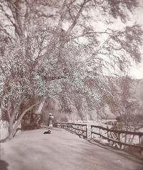 Bund in spring almond tree, Srinagar 1911